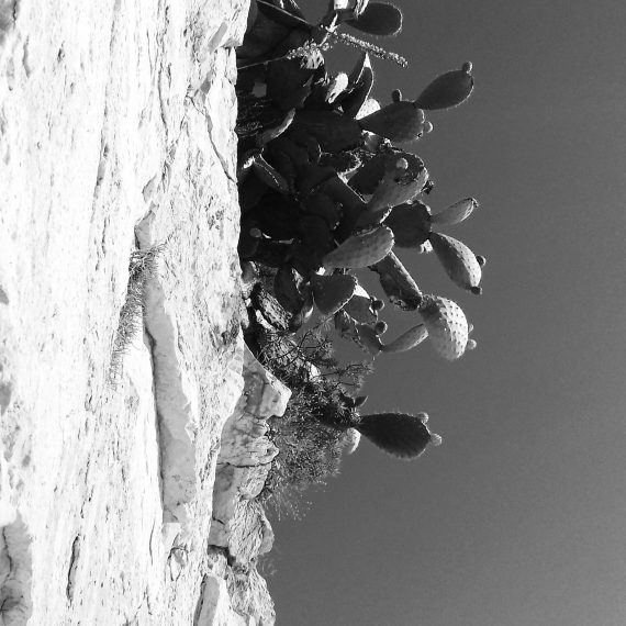 cactus, Nafplion (2016)