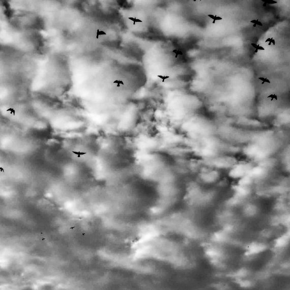the sky and the flying birds, Nafplion (2015)